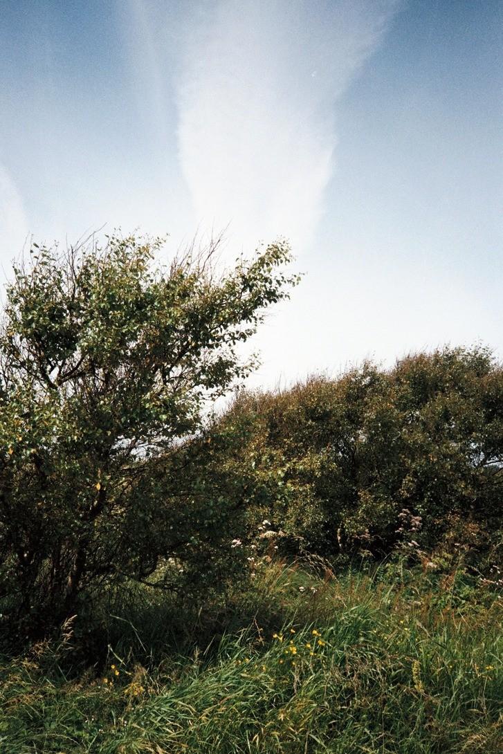 busk (ca. aug 2017)