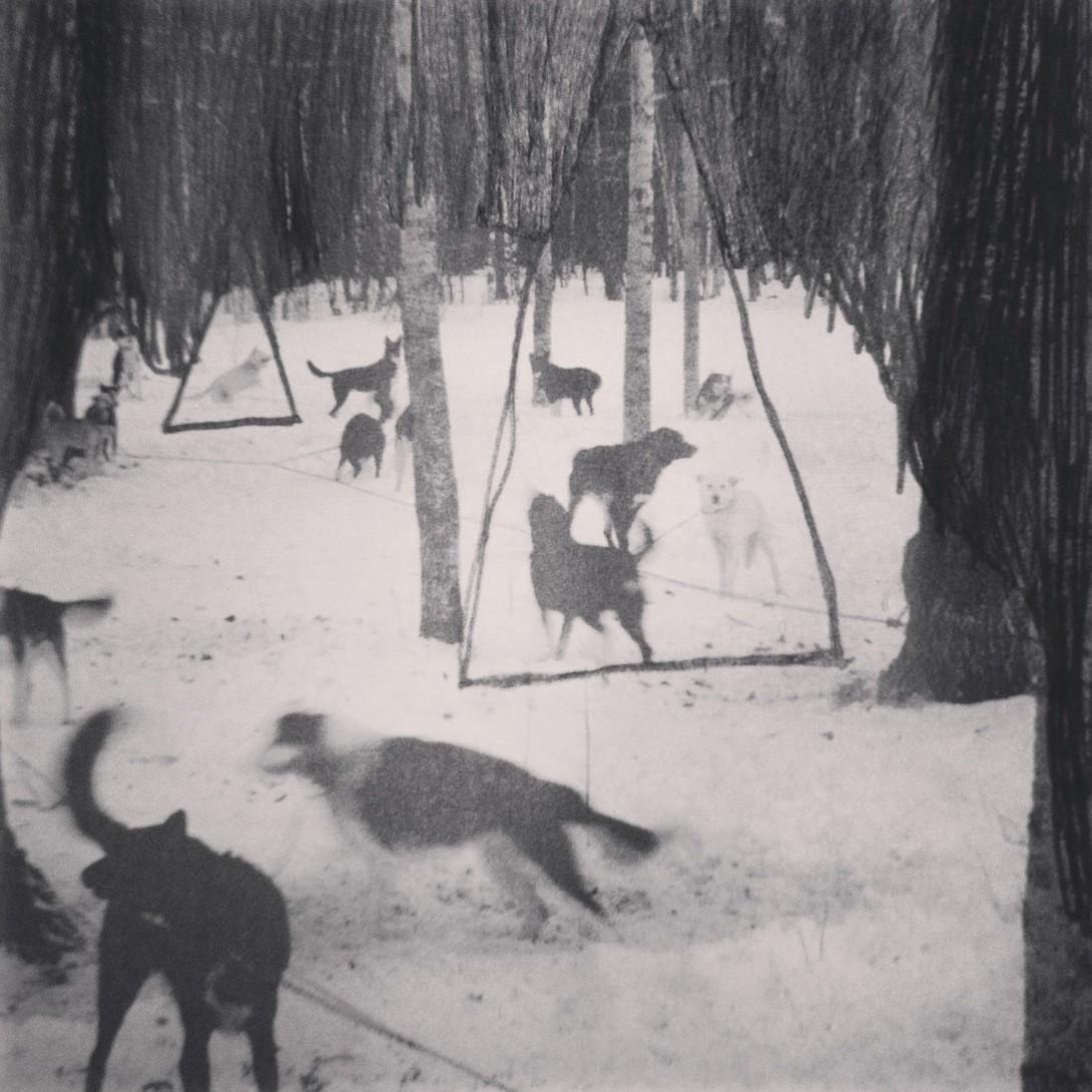 Hundene i Skogen
